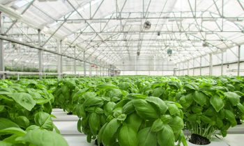 Image of Industrial Greenhouses
